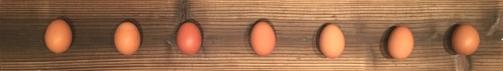 egg_boader0504