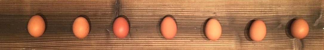 egg_boarder_big0504